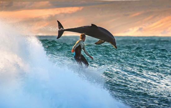 Dolphin_race